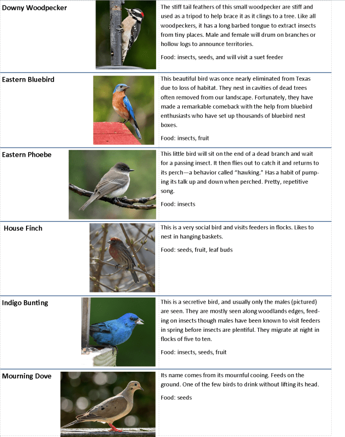 Backyard Bird chart.page 2