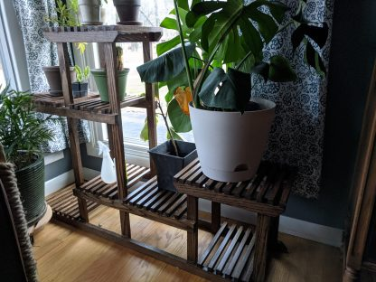 Large plant stand in window with plants