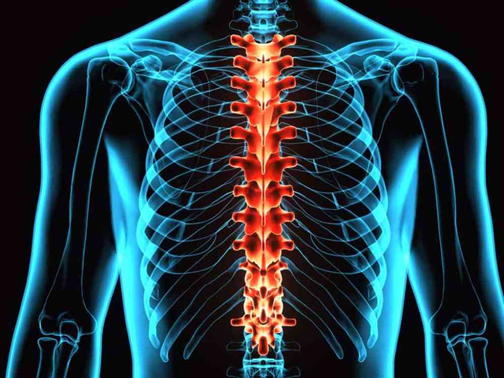 Reprogramming Of Cell Can Cure Spinal Cord Injury