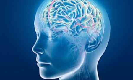 Brain Areas Seeks The Information On Good And Bad Possibilities