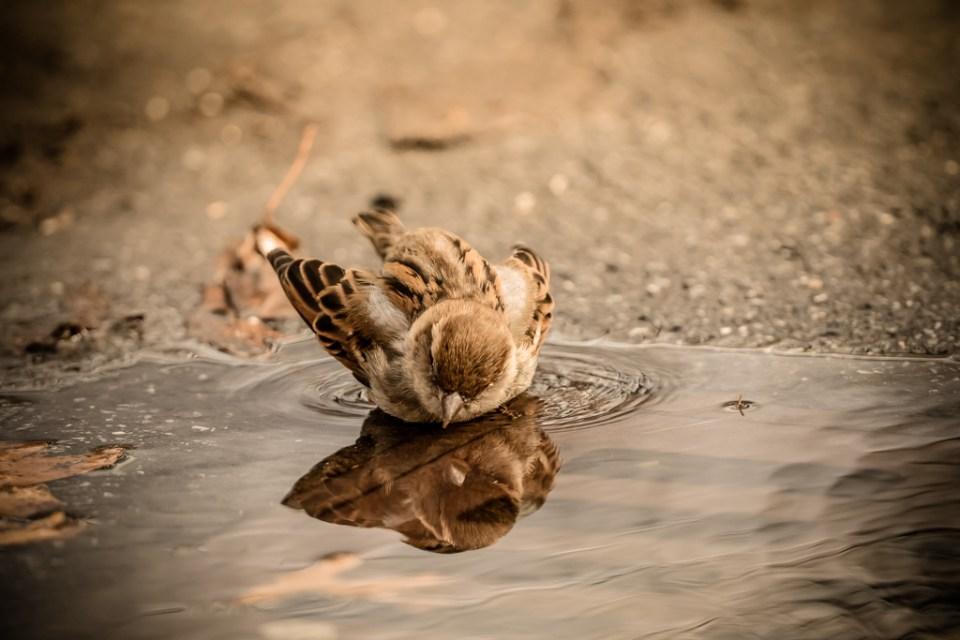 Sparrow by Reto Fürst