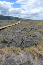 Petroglyphs can be viewed from the boardwalk which protects and preserves them.