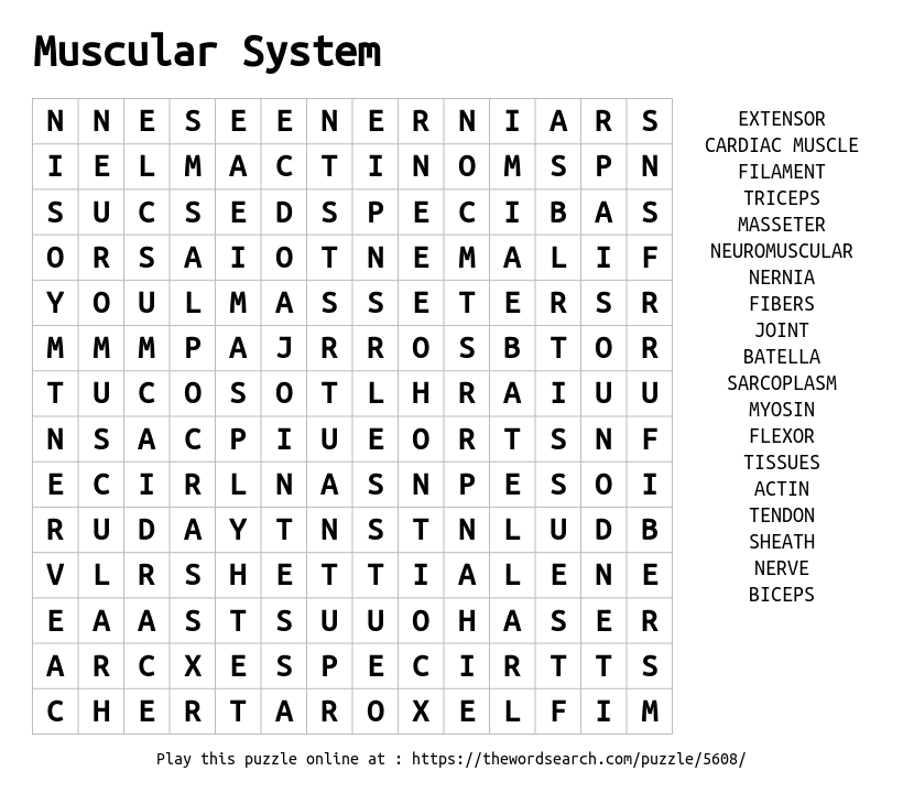 Download Word Search on Muscular System