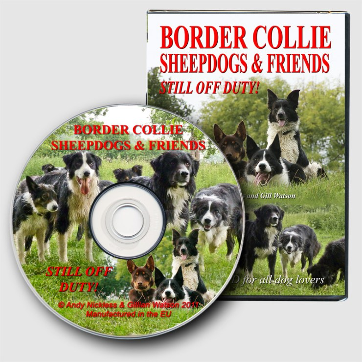 This is the case and disc of our new DVD - Border Collie Sheepdogs & Friends - Still Off Duty!