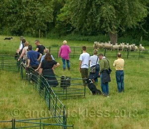 A training group of handlers and their dogs at a Kings Green Farm training day