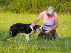 A nervous collie being stroked by Gill