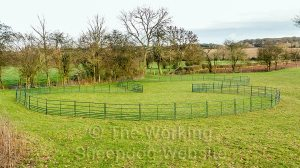 A hurdle ring is ideal for containing the sheep when you start training a young dog