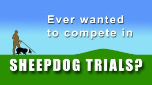 Image depicting sheepdog trial competitor with dog