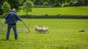 A handler and Sheepdog attempt to coax the sheep into a small pen at a sheepdog trial