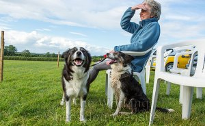 Gill sitting with the dogs watching the sheepdog trial in the sunshine