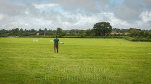 international handler Thomas Longton's dogs bring the sheep towards the post at Evesham Sheepdog Trials 2014