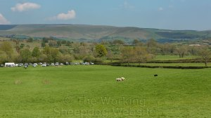 A sheepdog takes the sheep down towards the fetch gates at a sheepdog trial in Wales on a glorious day