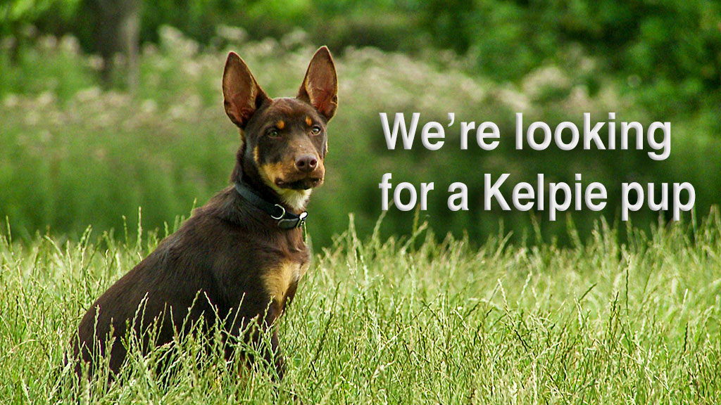 We want to find a working Kelpie