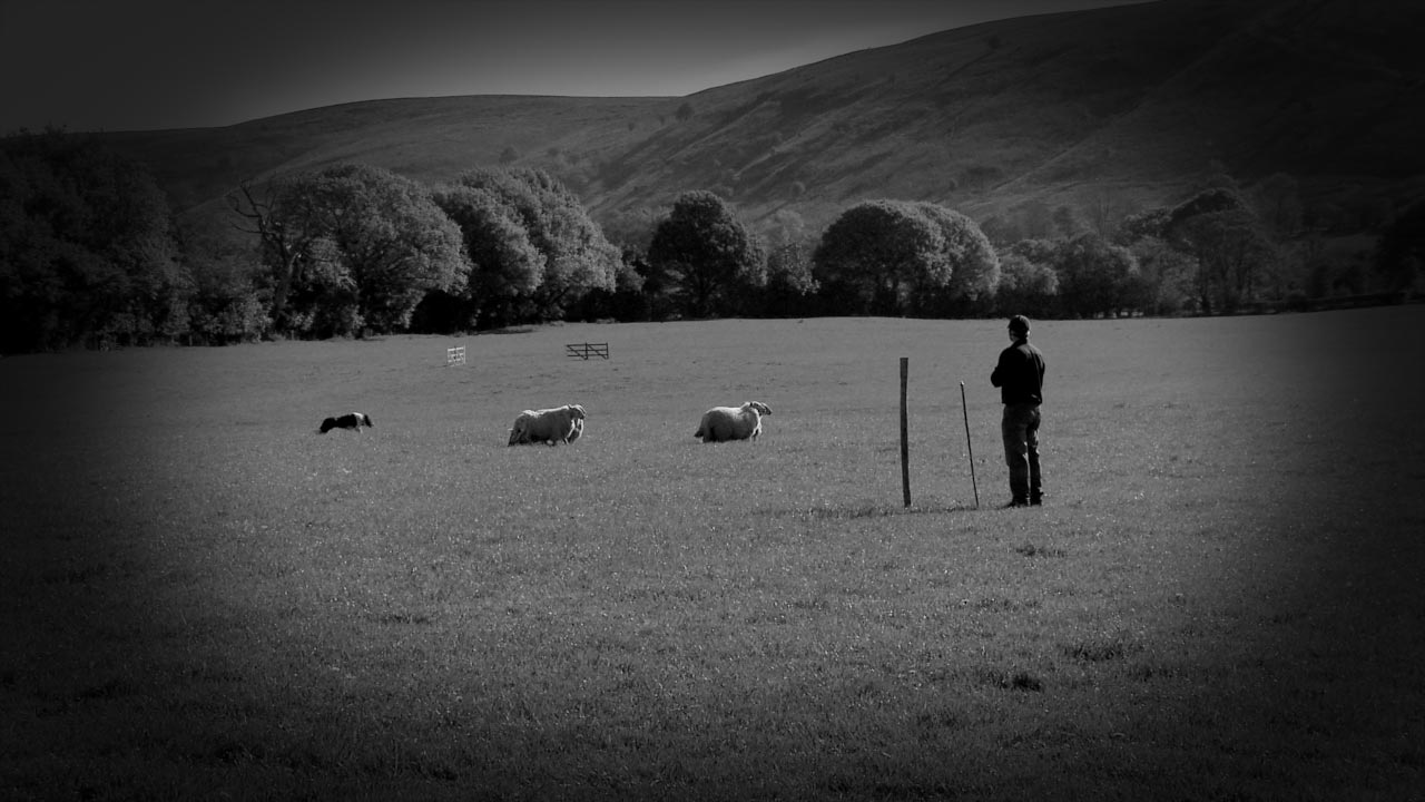 Our video tutorial about the all important point of balance when training a sheepdog