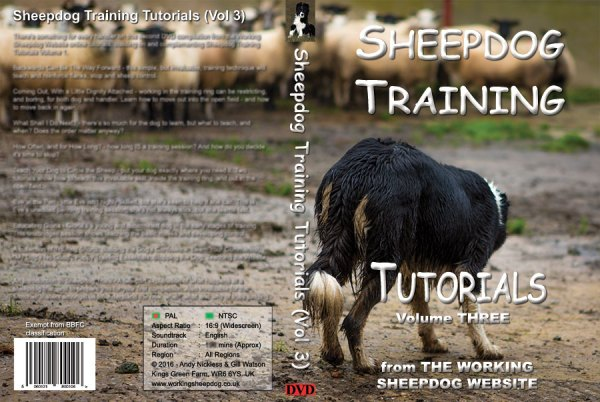 Sheep and Stock Herding dog Carew on the cover of our sheepdog training DVD