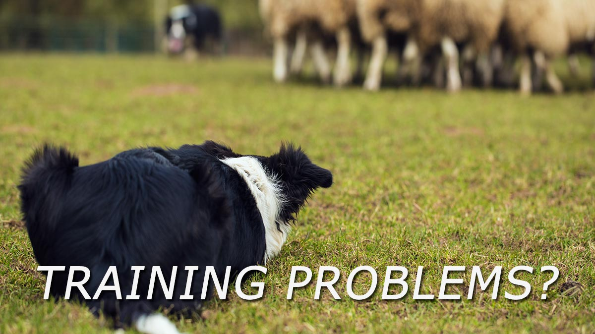 Herding sheepdog training video assessments title image