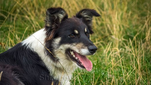 Close up photo of Bronwen in a grassy field