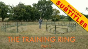 Sheepdog training ring title image showing the availability of English subtitles