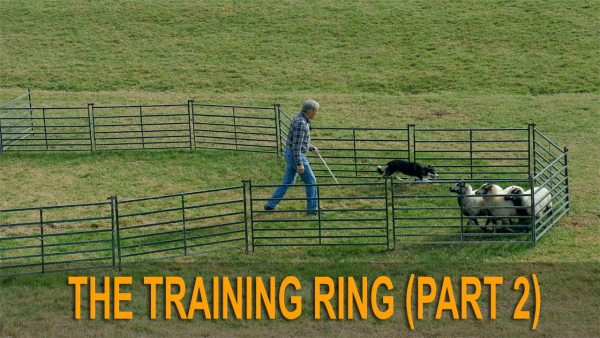 Poster image for our sheepdog training tutorial The Training Ring (part 2)