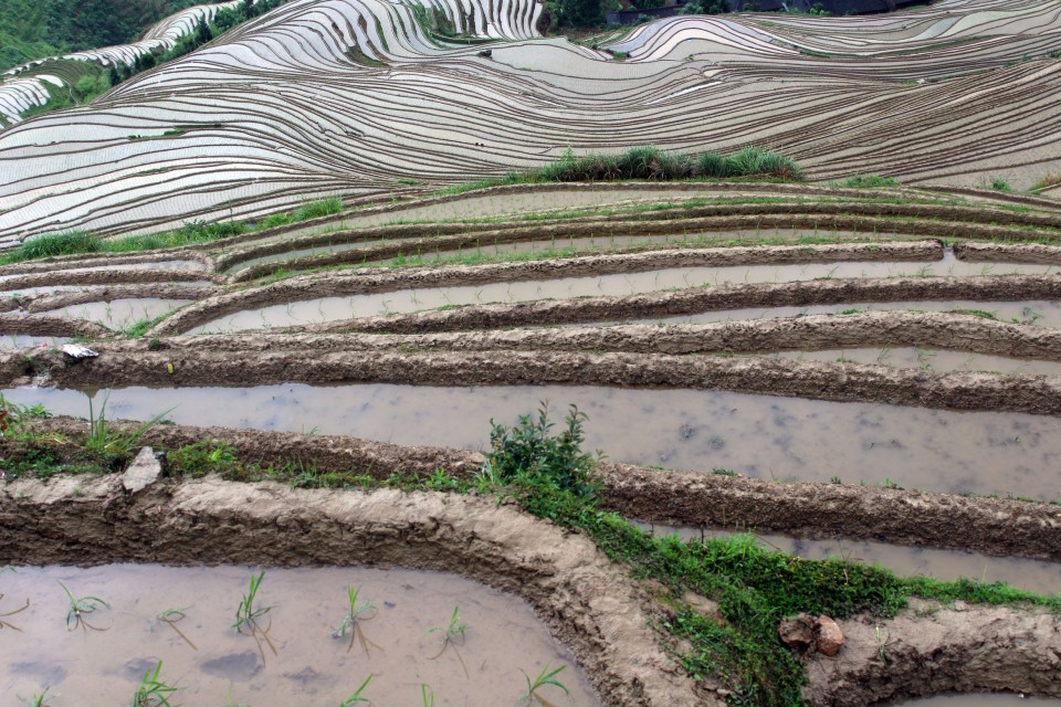 longji-rice-terrace-14