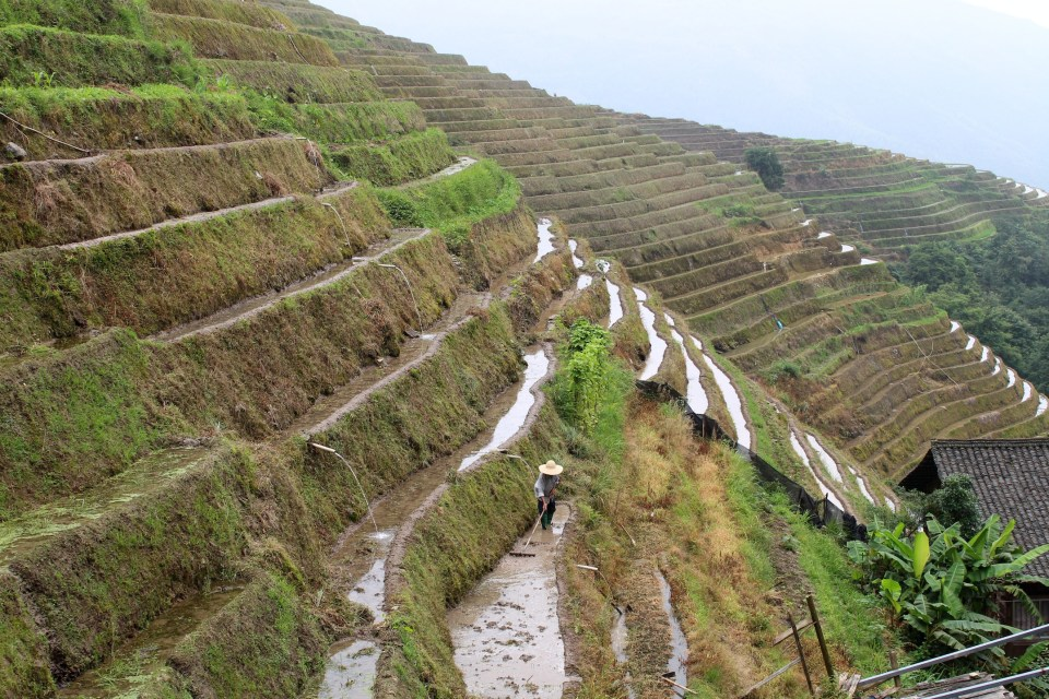 longji-rice-terrace-2