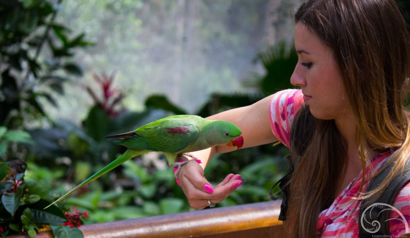 Kuranda-BirdWorld-Amanda-Travel-Blogger2