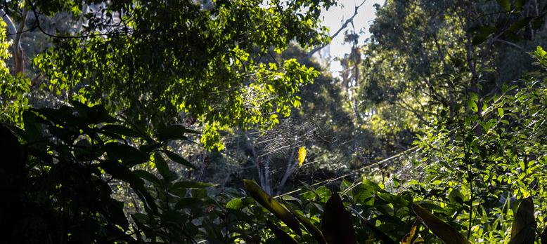Australia-spider-webs