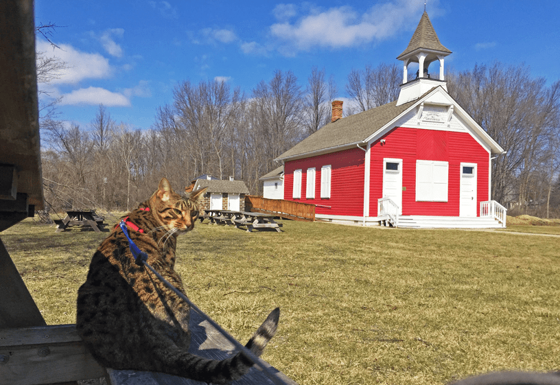 Cheddar the cheetoh cat visiting the one room school house in Chesterfield.