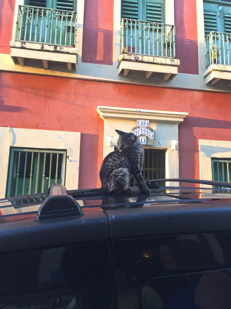 cats in Puerto Rico