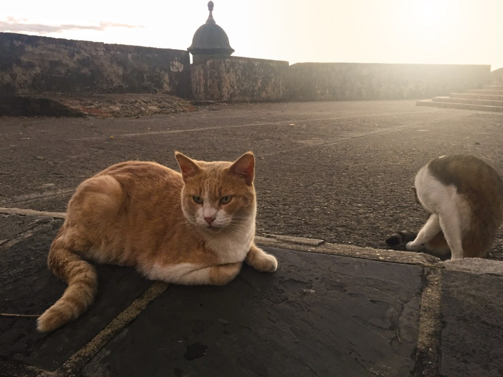 Old San Juan Puerto Rico sunset cats