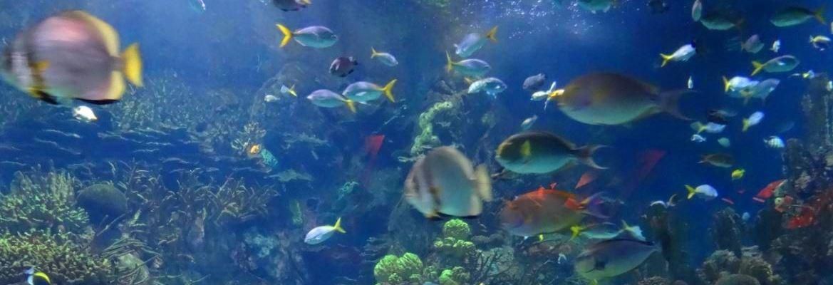 the biggest aquarium of