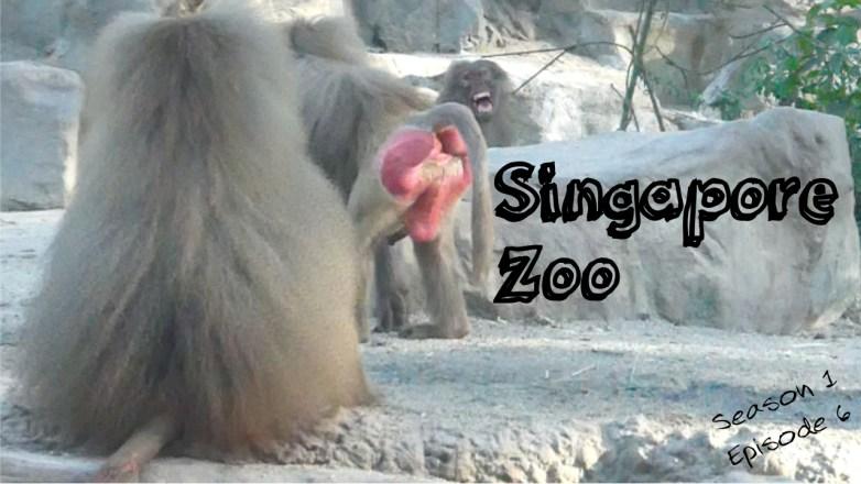 Singapore Zoo