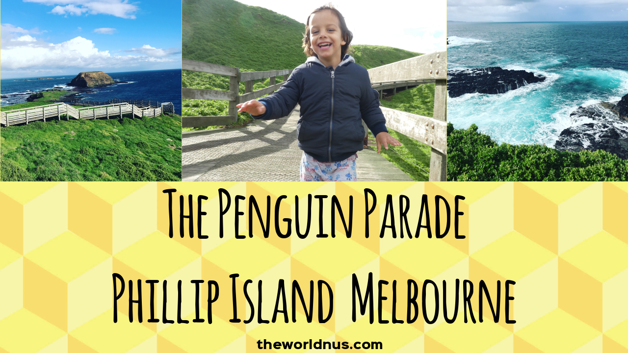 Travel with Kids - Penguin Parade | Phillip Island Melbourne | Australia