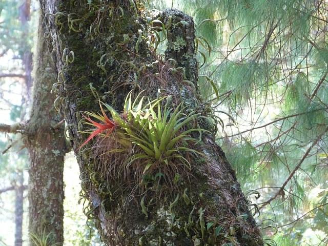 Native ferns in the Sierra Norte Mountains in Oaxaca