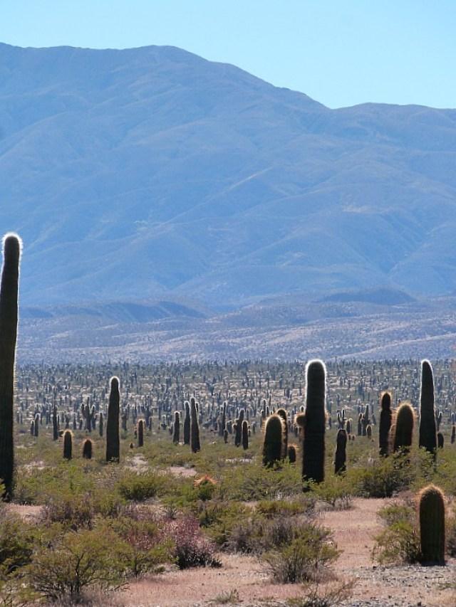 Cactus desert near Cachi, Northern Argentina