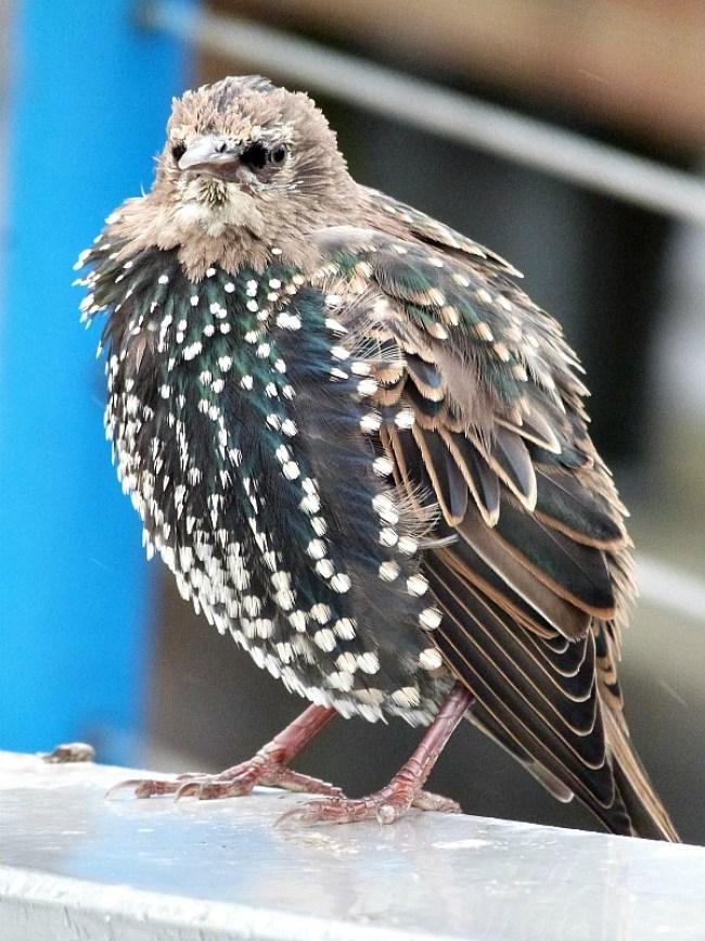 Bird in Vancouver, Canada