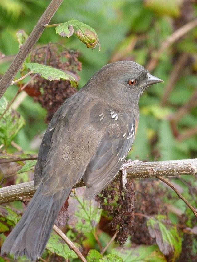 Cute bird on Denman Island in Canada
