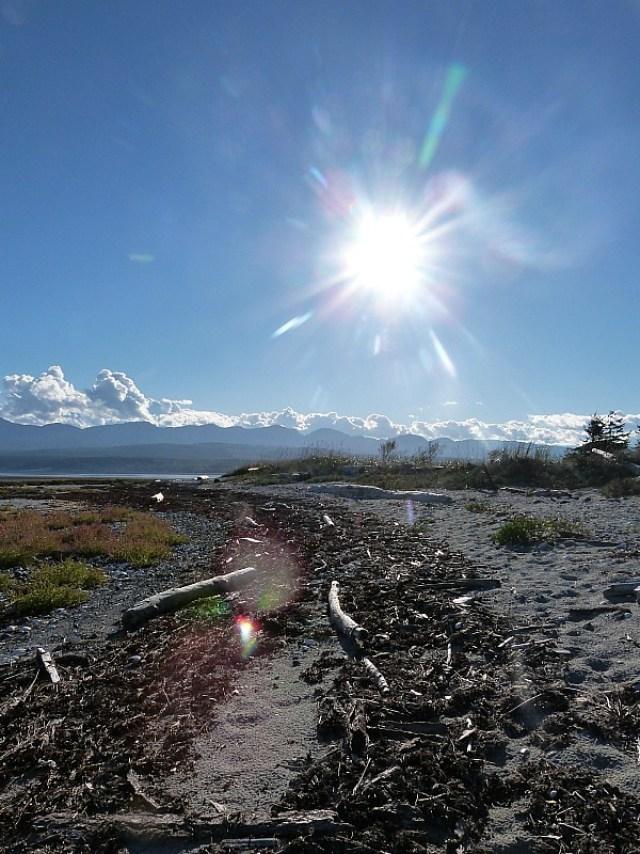 Tree island off Denman Island in Canada
