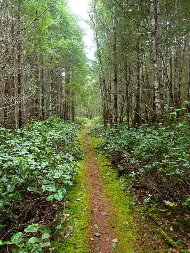 Hiking on Denman Island in Canada