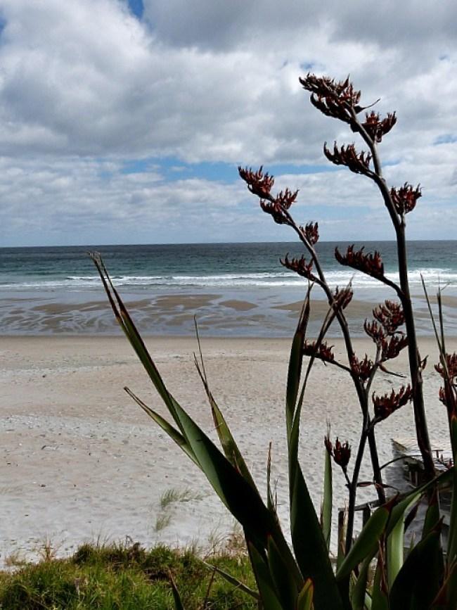 Quiet beach on Waiheke Island in Auckland, New Zealand