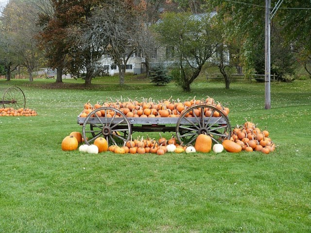 A wagon of pumpkins - one of the reasons to experience fall in north america