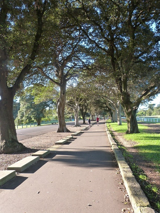 Sydney City Parks - One of the 30 reasons why I love Sydney