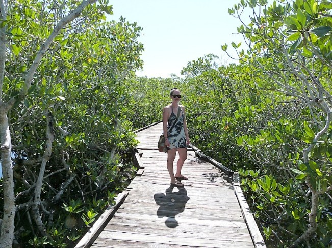 Wandering the mangroves at John Pennecamp State Park in Key Largo, Florida