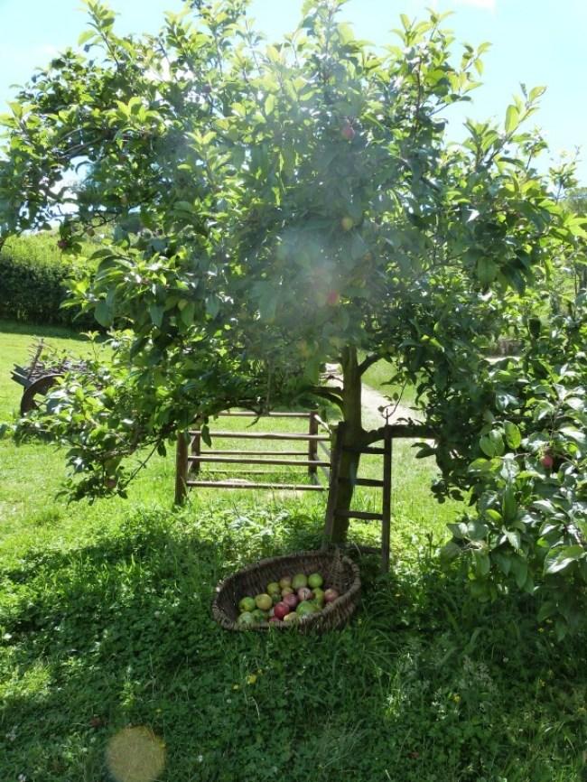 Orchard at Hobbiton New Zealand