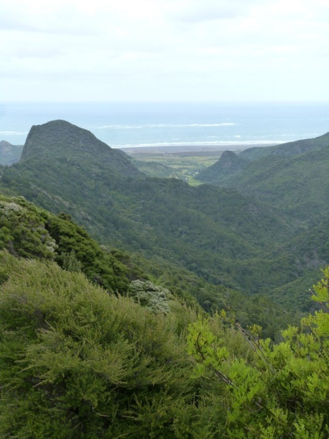 Views from the Hillary Trail in the Waitakere Ranges of Auckland, New Zealand