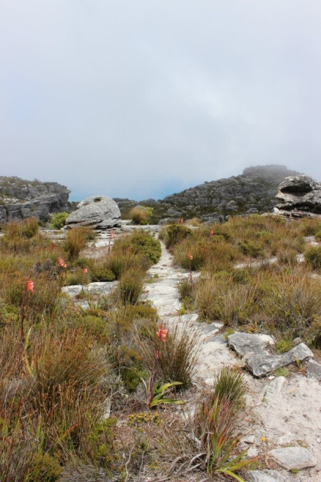 Reaching the top of the Platteklip Gorge trail up Table Mountain in Cape Town