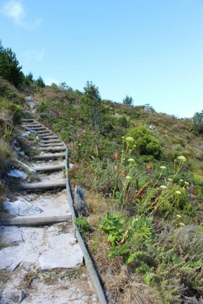 Hiking around Cape Town's Mountains