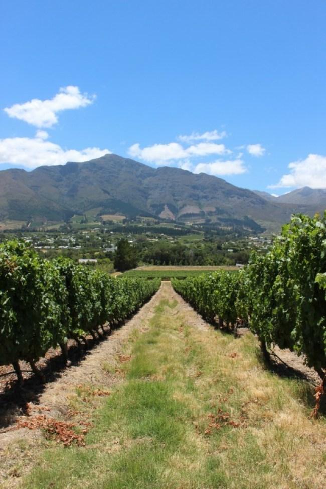 Mont Rochelle Winery in Franschhoek near Cape Town