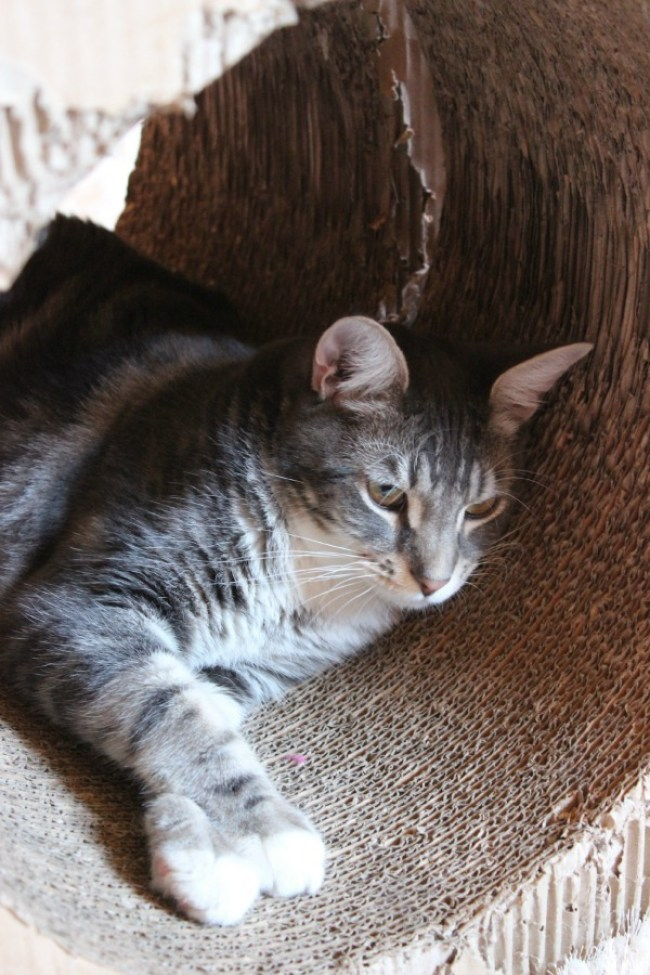 Visiting the Cat Cafe Melbourne - part of the perfect 24 hours in Melbourne Itinerary
