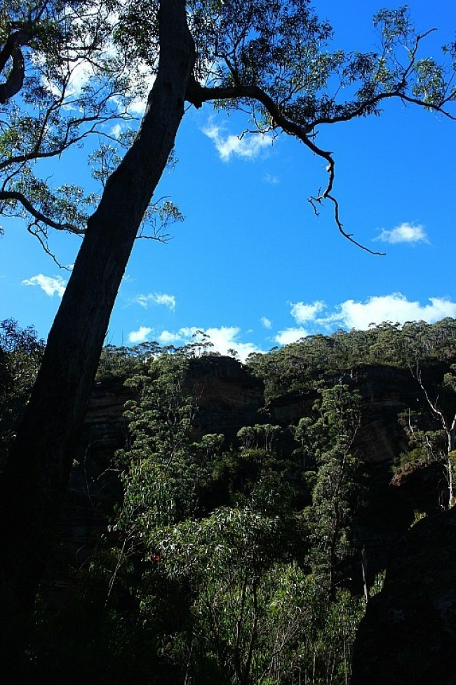 Blue skies in the Grand Canyon of Australia, located in the Blue Mountains